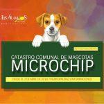 LEY CHOLITO: MUNICIPIO REALIZARÁ CATASTRO DE MASCOTAS QUE NECESITAN MICROCHIP