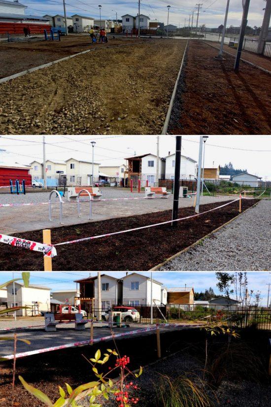 Desde los inicios del Programa de Mejoramiento Urbano a las primeras plantas del área intervenida.