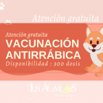 LA PRÓXIMA SEMANA HABRÁ CAMPAÑA DE VACUNACIÓN ANTIRRÁBICA | MUNICIPIO INVITA A RESERVAR HORA